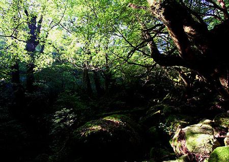 06もののけの森の夜明け(白谷雲水峡)