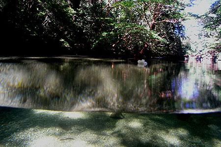 23)淀川の清流3(尾之間歩道)