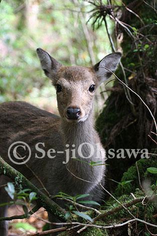 photo_061109.jpg