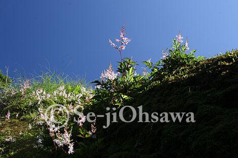 photo_070802.jpg