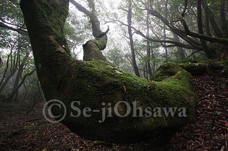 photo_071111.jpg