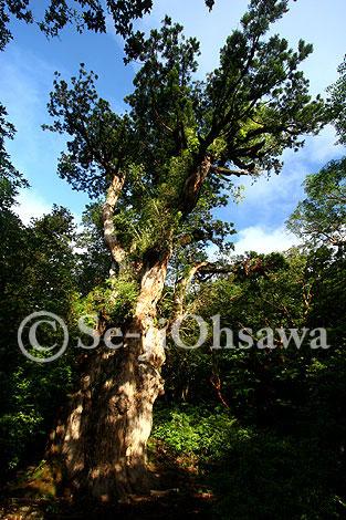 photo_jyo_060712.jpg