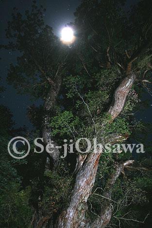 photo_jyo_061109.jpg