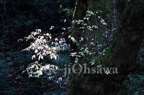 photo_mori_071120.jpg