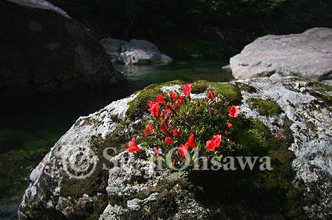 photo_syo_050605.jpg