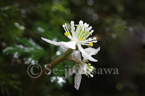 photo_syo_080327.jpg