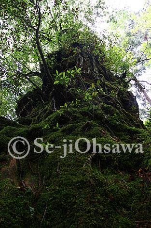photo_yaku_050605.jpg