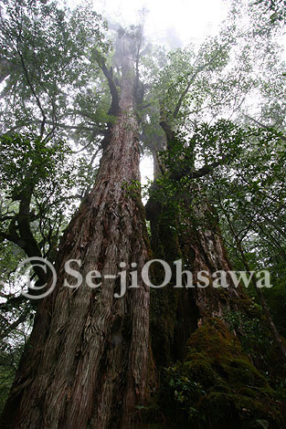 photo_yaku_050614.jpg