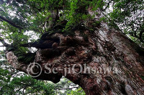 photo_yaku_071021.jpg